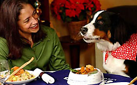holiday feast with dog